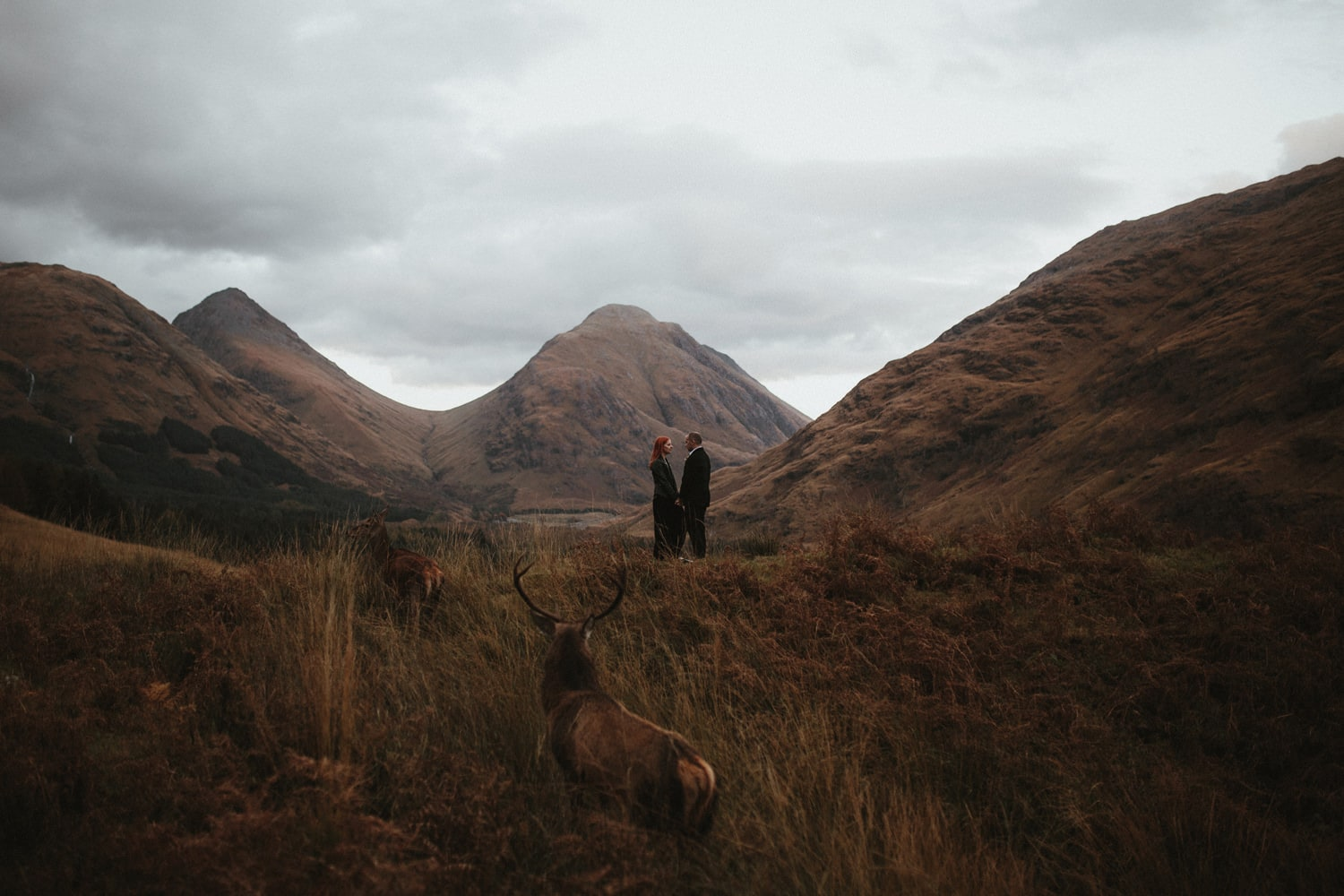 couple eloping in Scotland with highland deer in the background
